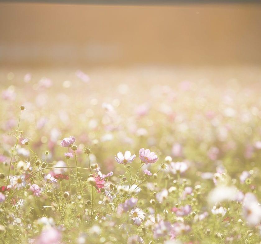Background Backlight Blur Color 262713
