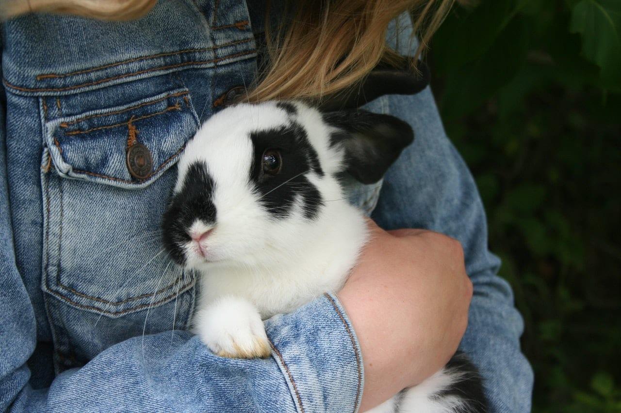 child holding rabbit