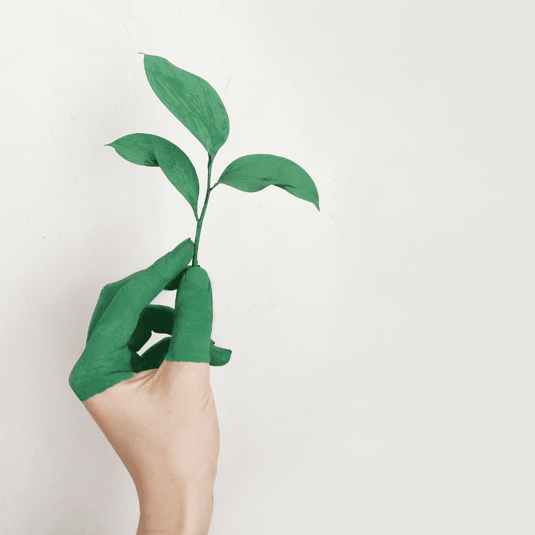 Green washed hand holding plant