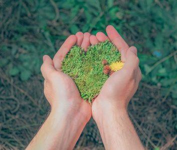Hands holding grass
